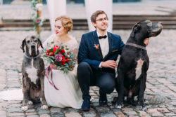 Brautpaar posiert mit Hunden